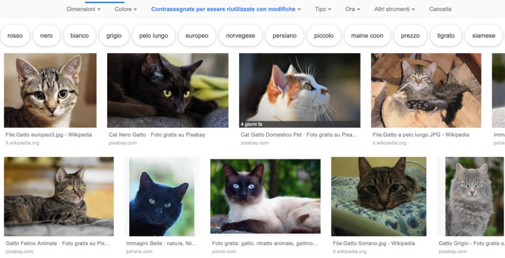 screenshot ricerca Google immagini